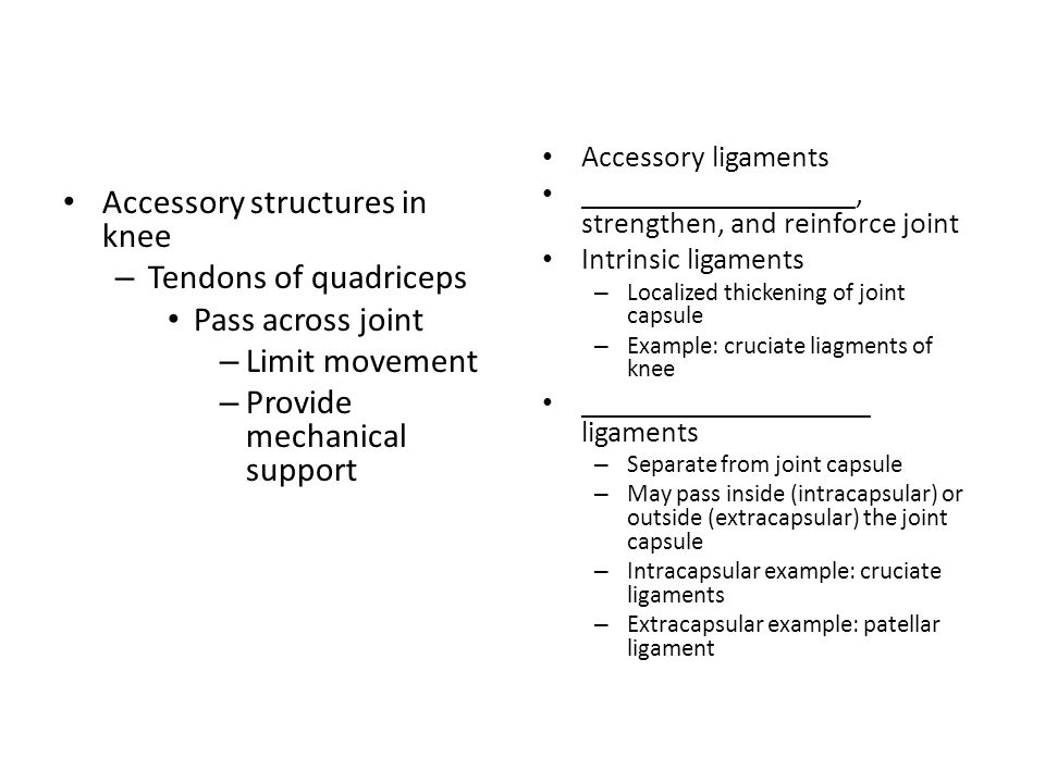 Accessory structures in knee – Tendons of quadriceps Pass across joint – Limit movement – Provide mechanical support Accessory ligaments _____________