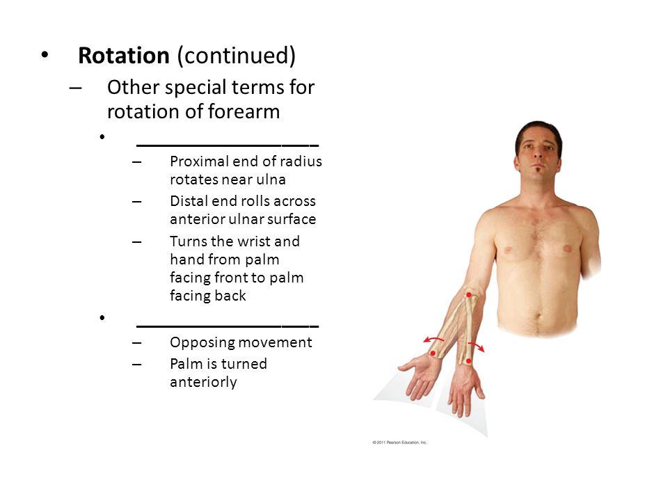 Rotation (continued) – Other special terms for rotation of forearm ____________________ – Proximal end of radius rotates near ulna – Distal end rolls