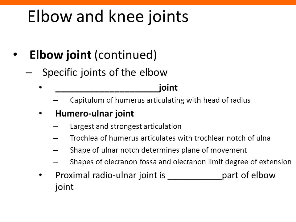 Elbow and knee joints Elbow joint (continued) – Specific joints of the elbow _____________________joint – Capitulum of humerus articulating with head