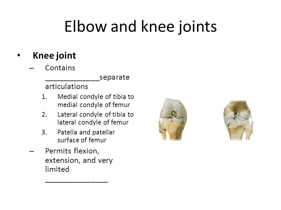 Elbow and knee joints Knee joint – Contains _____________separate articulations 1.Medial condyle of tibia to medial condyle of femur 2.Lateral condyle