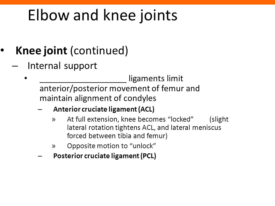 Elbow and knee joints Knee joint (continued) – Internal support ___________________ ligaments limit anterior/posterior movement of femur and maintain