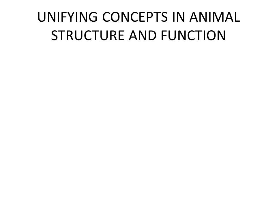 UNIFYING CONCEPTS IN ANIMAL STRUCTURE AND FUNCTION