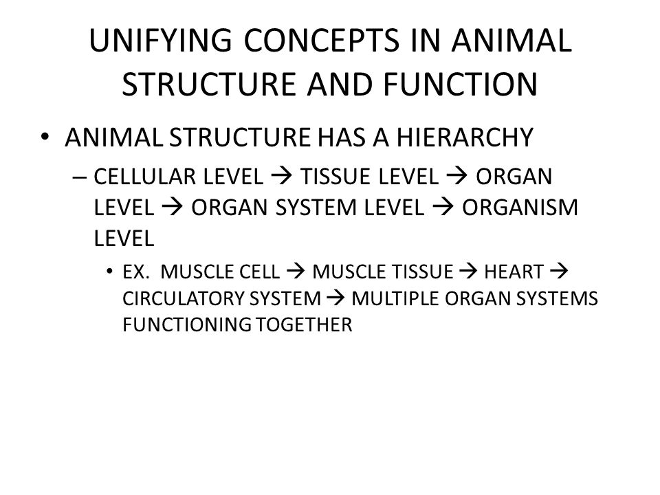 UNIFYING CONCEPTS IN ANIMAL STRUCTURE AND FUNCTION SEVERAL TISSUES ARE ORGANIZED TO FORM AN ORGAN – ORGAN CONSISTS OF SEVERAL TISSUES ADAPTED TO PERFORM SPECIFIC FUNCTIONS AS A GROUP THE FUNCTION OF AN ORGAN RESULTS FROM THE COOPERATIVE INTERACTIONS OF ITS TISSUES
