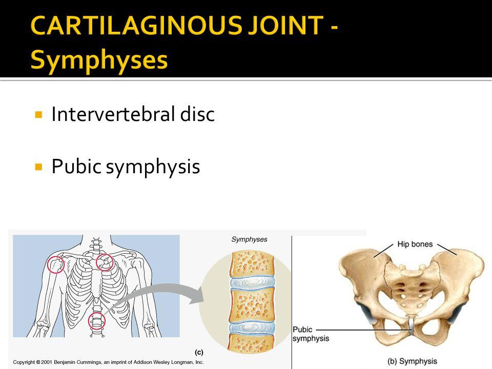  Intervertebral disc  Pubic symphysis