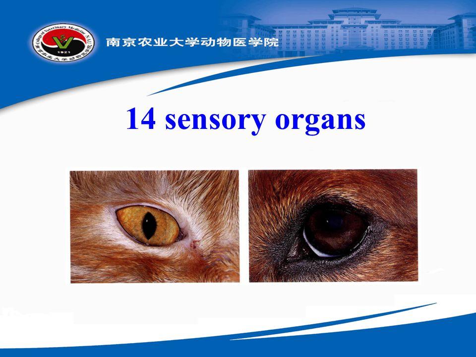 14 sensory organs
