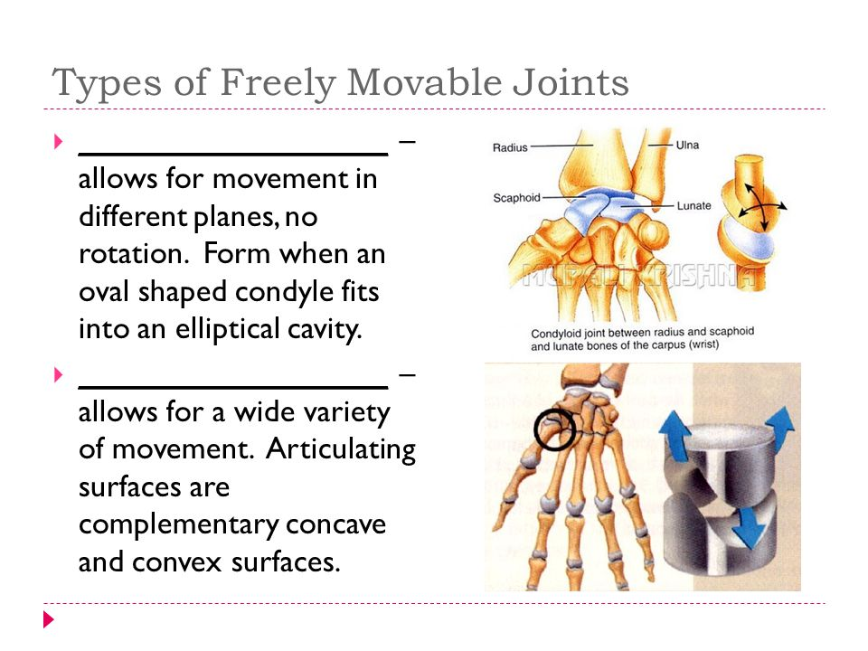 Types of Freely Movable Joints  __________________ – allows for movement in different planes, no rotation. Form when an oval shaped condyle fits into