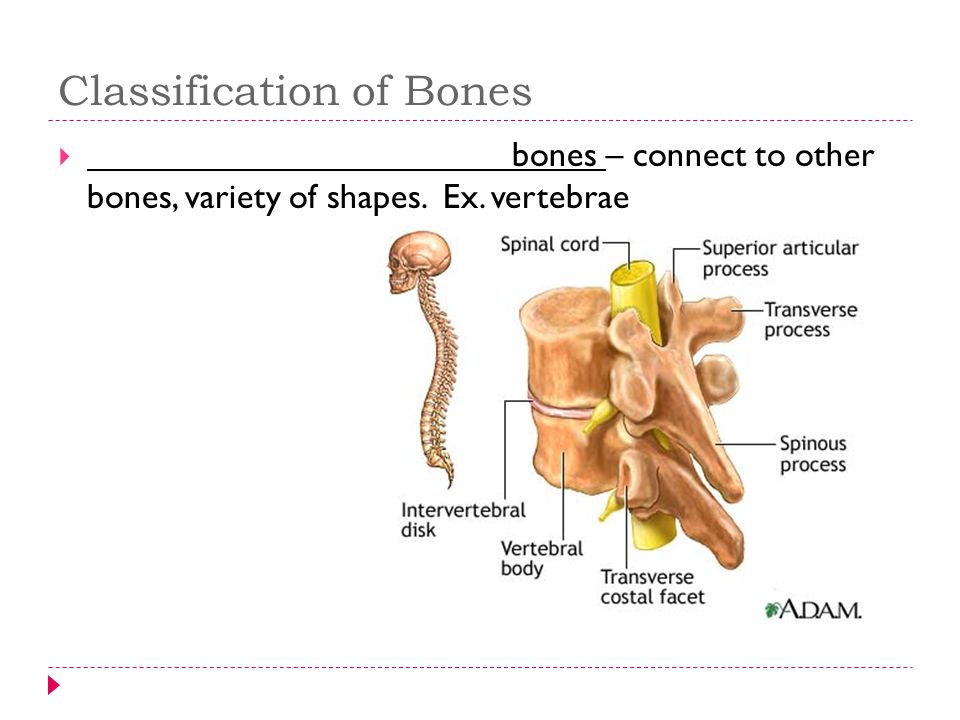 Types of Joint Movement  ______________ – decreasing the angle between two bones.