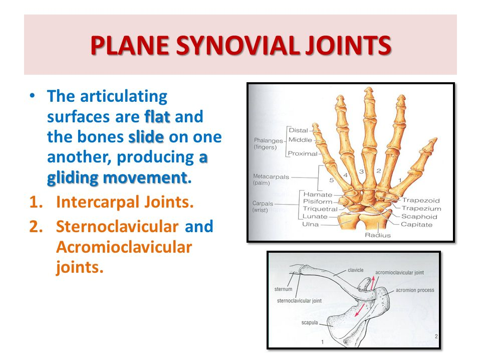 PLANE SYNOVIAL JOINTS flat slide a gliding movement The articulating surfaces are flat and the bones slide on one another, producing a gliding movemen
