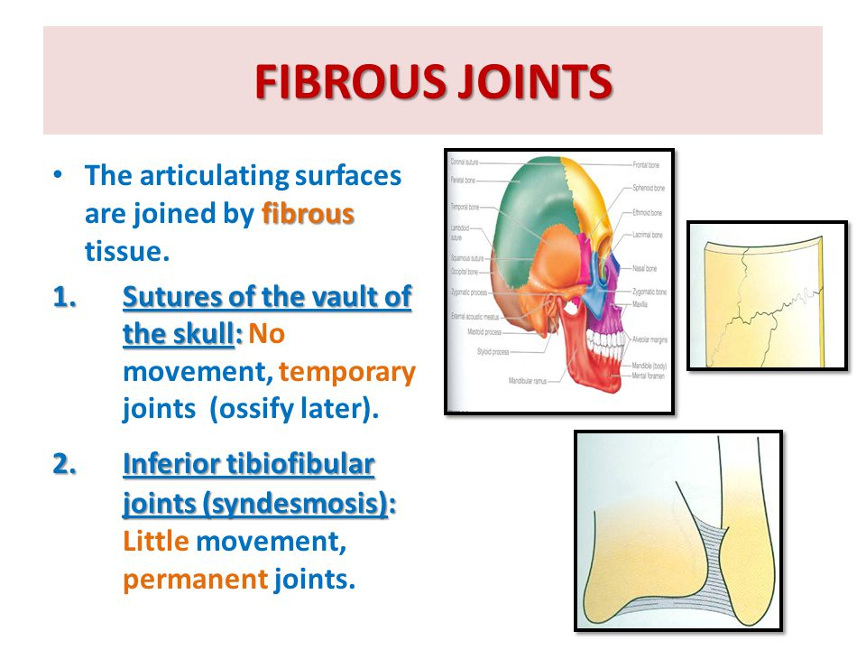 POLYAXIAL SYNOVIAL JOINTS  Ball-and-socket joints: A ball – shaped head of one bone fits into a socket like concavity of another.