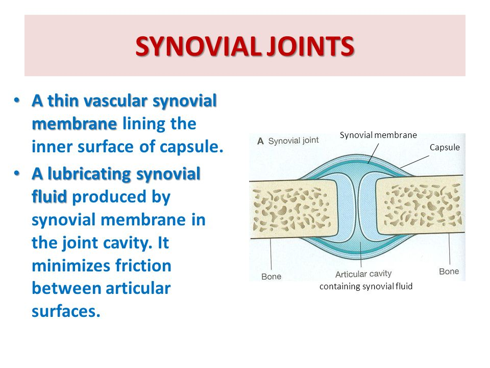 CLASSIFICATION OF SYNOVIAL JOINTS range of movement  Synovial joints are classified according to the range of movement into: Plane synovial joints.