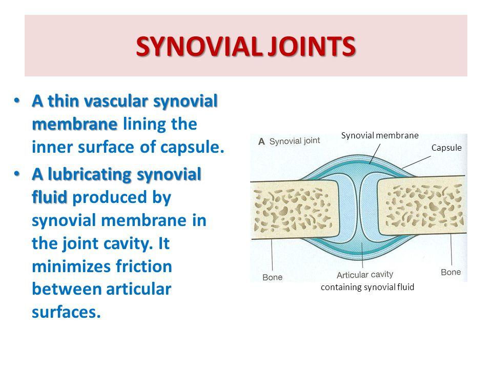 NERVE SUPPLY OF JOINTS abundant sensory nerve supply.