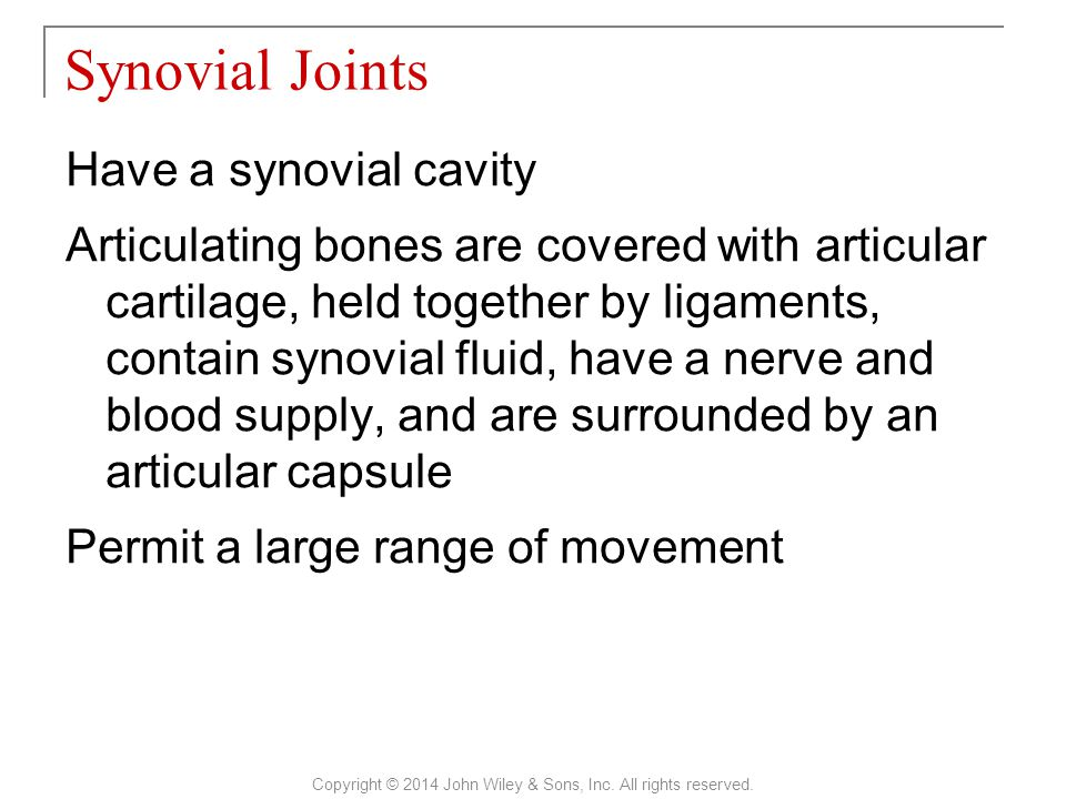 Have a synovial cavity Articulating bones are covered with articular cartilage, held together by ligaments, contain synovial fluid, have a nerve and b