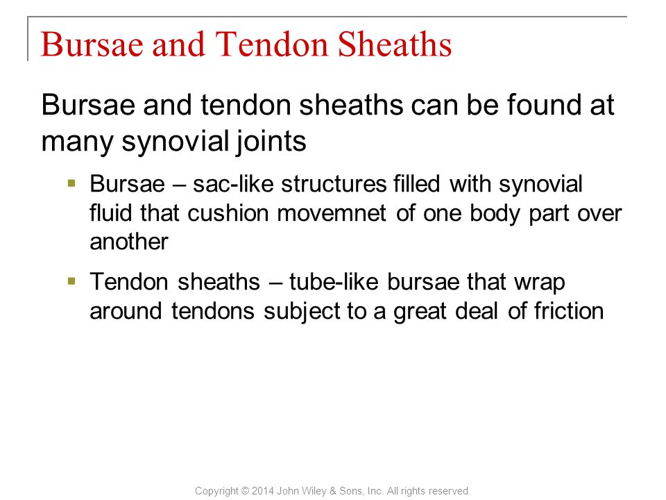 Bursae and tendon sheaths can be found at many synovial joints  Bursae – sac-like structures filled with synovial fluid that cushion movemnet of one