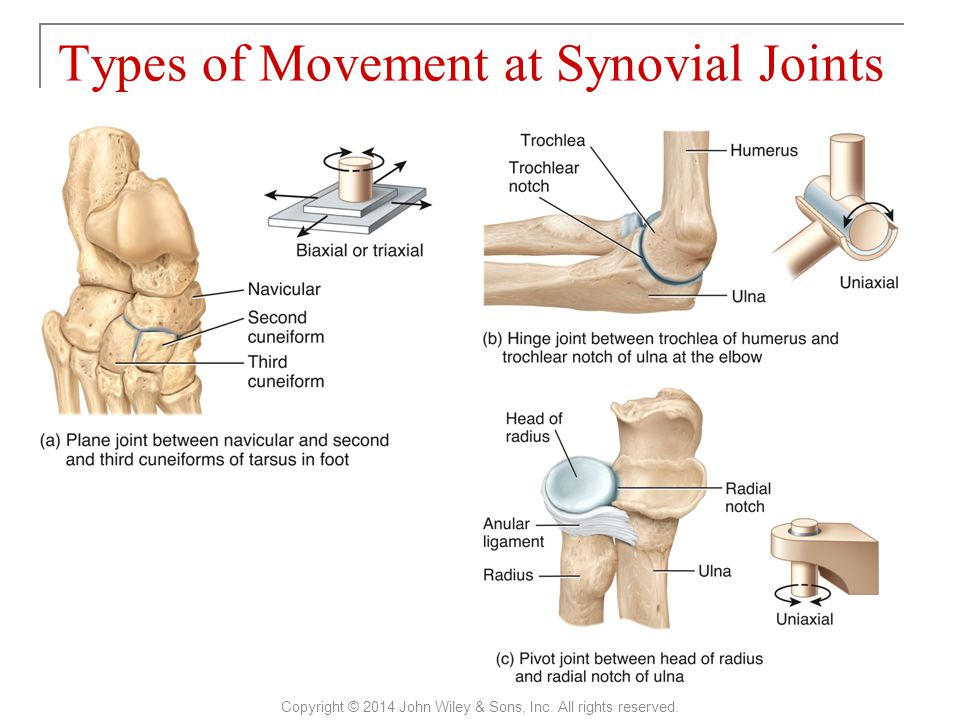 Types of Movement at Synovial Joints Copyright © 2014 John Wiley & Sons, Inc. All rights reserved.