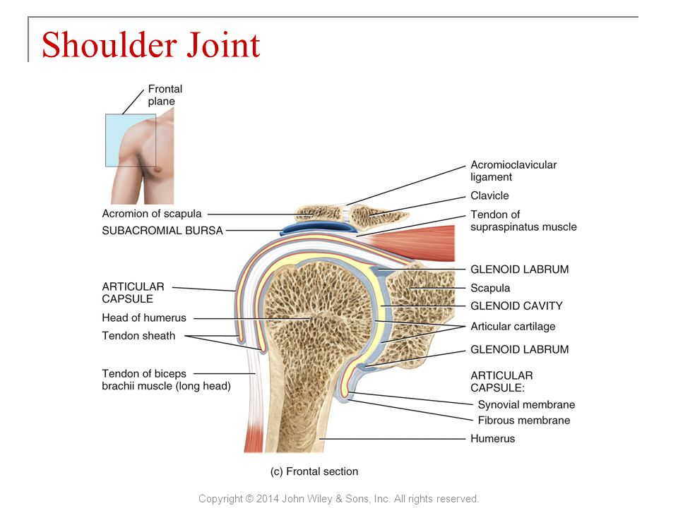 Shoulder Joint Copyright © 2014 John Wiley & Sons, Inc. All rights reserved.