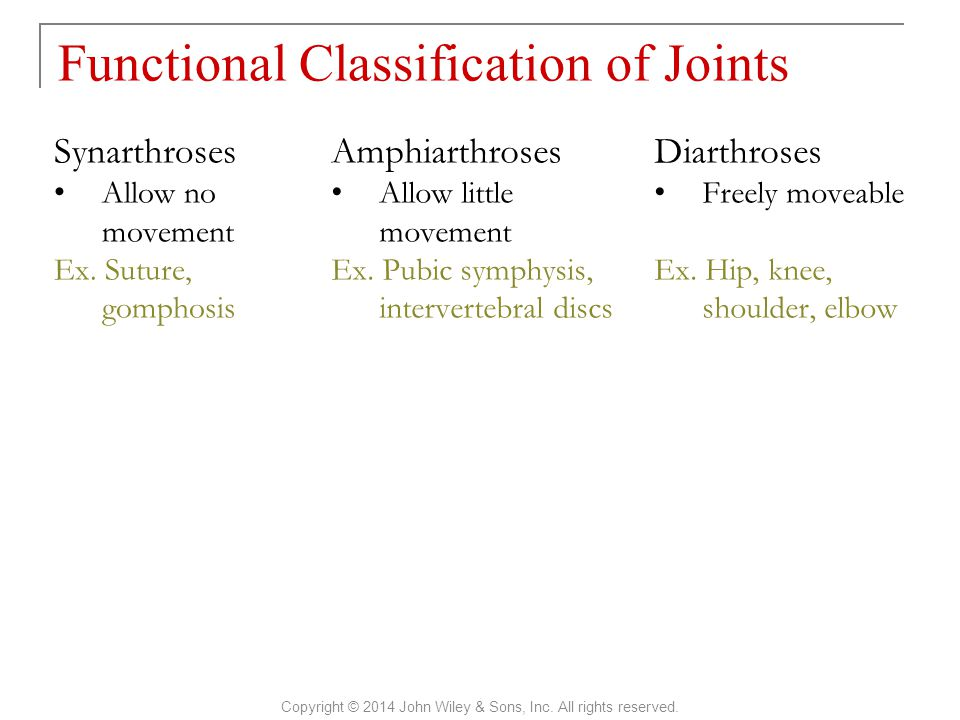Functional Classification of Joints Copyright © 2014 John Wiley & Sons, Inc. All rights reserved. Synarthroses Allow no movement Ex. Suture, gomphosis