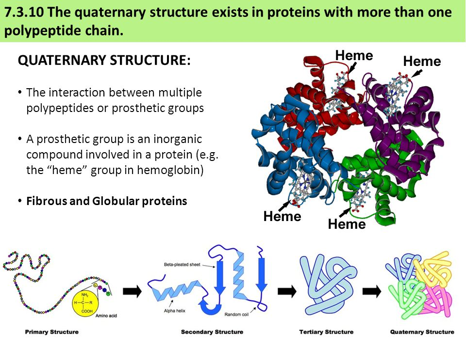 7.3.10 The quaternary structure exists in proteins with more than one polypeptide chain.