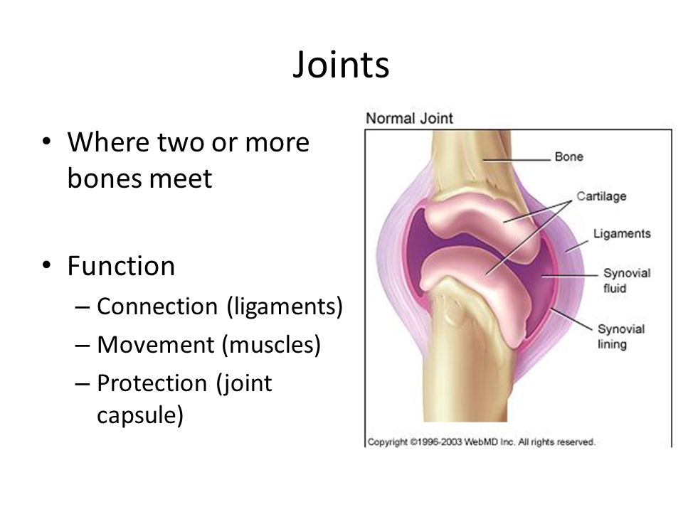 Joints Where two or more bones meet Function – Connection (ligaments) – Movement (muscles) – Protection (joint capsule)