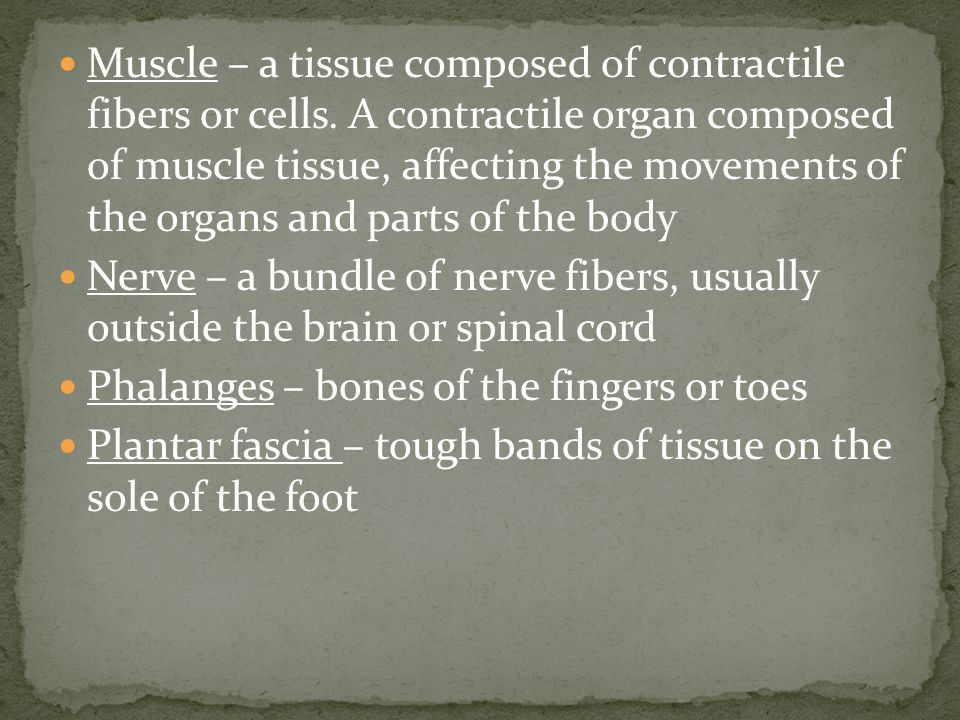 Muscle – a tissue composed of contractile fibers or cells.