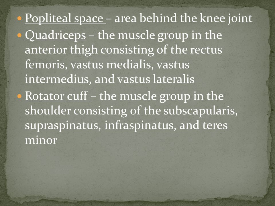 Popliteal space – area behind the knee joint Quadriceps – the muscle group in the anterior thigh consisting of the rectus femoris, vastus medialis, vastus intermedius, and vastus lateralis Rotator cuff – the muscle group in the shoulder consisting of the subscapularis, supraspinatus, infraspinatus, and teres minor