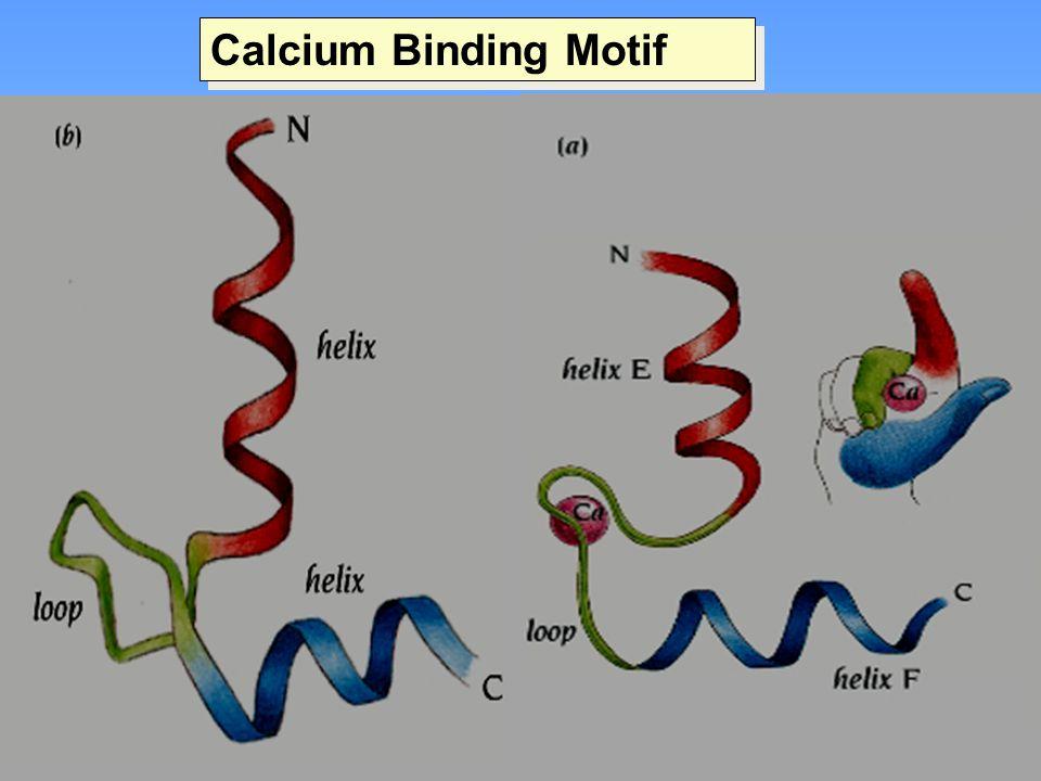 Calcium Binding Motif