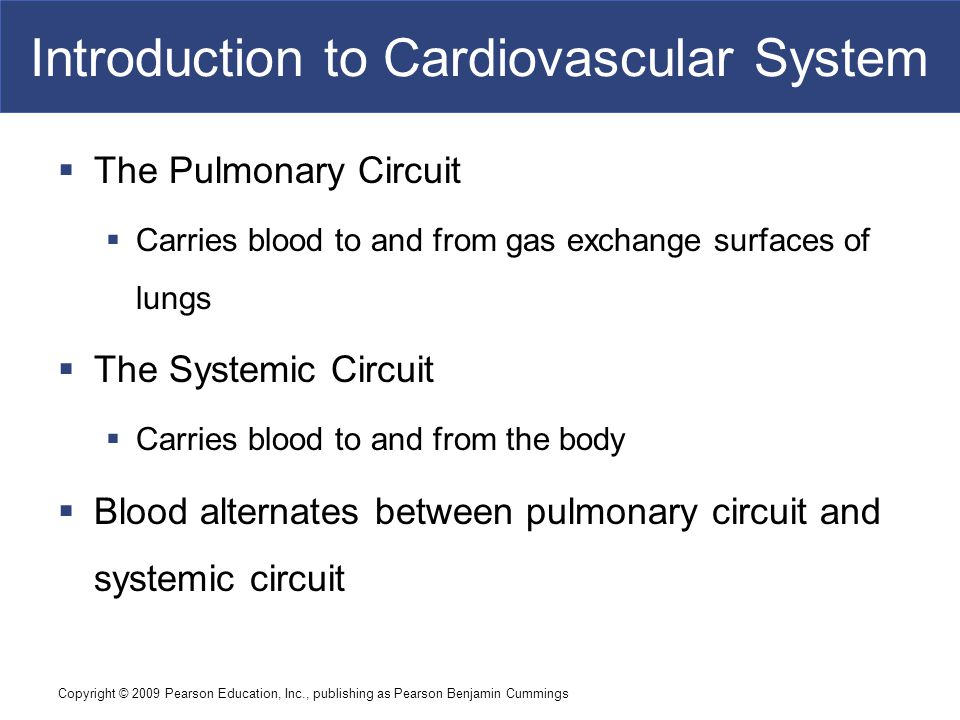 Copyright © 2009 Pearson Education, Inc., publishing as Pearson Benjamin Cummings Introduction to Cardiovascular System  The Pulmonary Circuit  Carr
