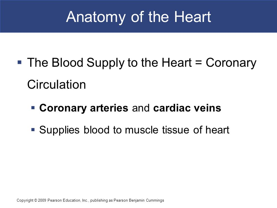 Copyright © 2009 Pearson Education, Inc., publishing as Pearson Benjamin Cummings Anatomy of the Heart  The Blood Supply to the Heart = Coronary Circ