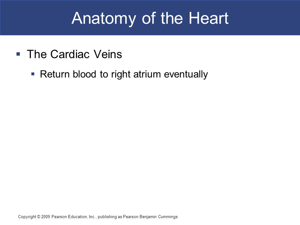 Copyright © 2009 Pearson Education, Inc., publishing as Pearson Benjamin Cummings Anatomy of the Heart  The Cardiac Veins  Return blood to right atr