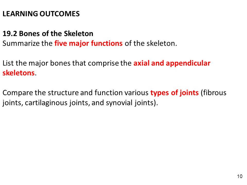 10 LEARNING OUTCOMES 19.2 Bones of the Skeleton Summarize the five major functions of the skeleton.