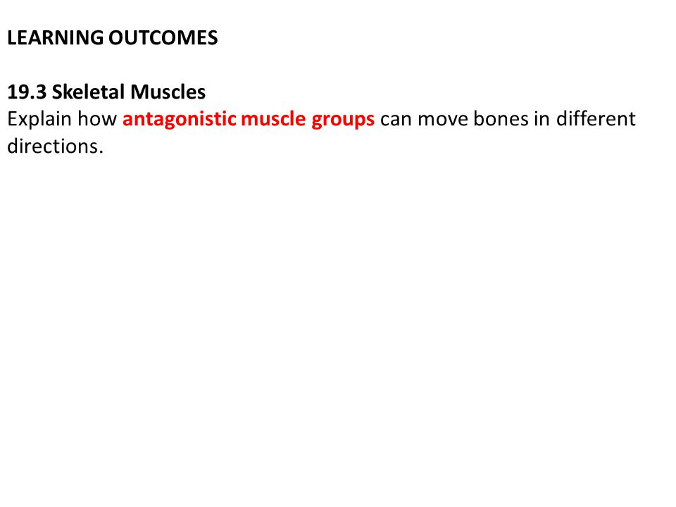 LEARNING OUTCOMES 19.3 Skeletal Muscles Explain how antagonistic muscle groups can move bones in different directions.