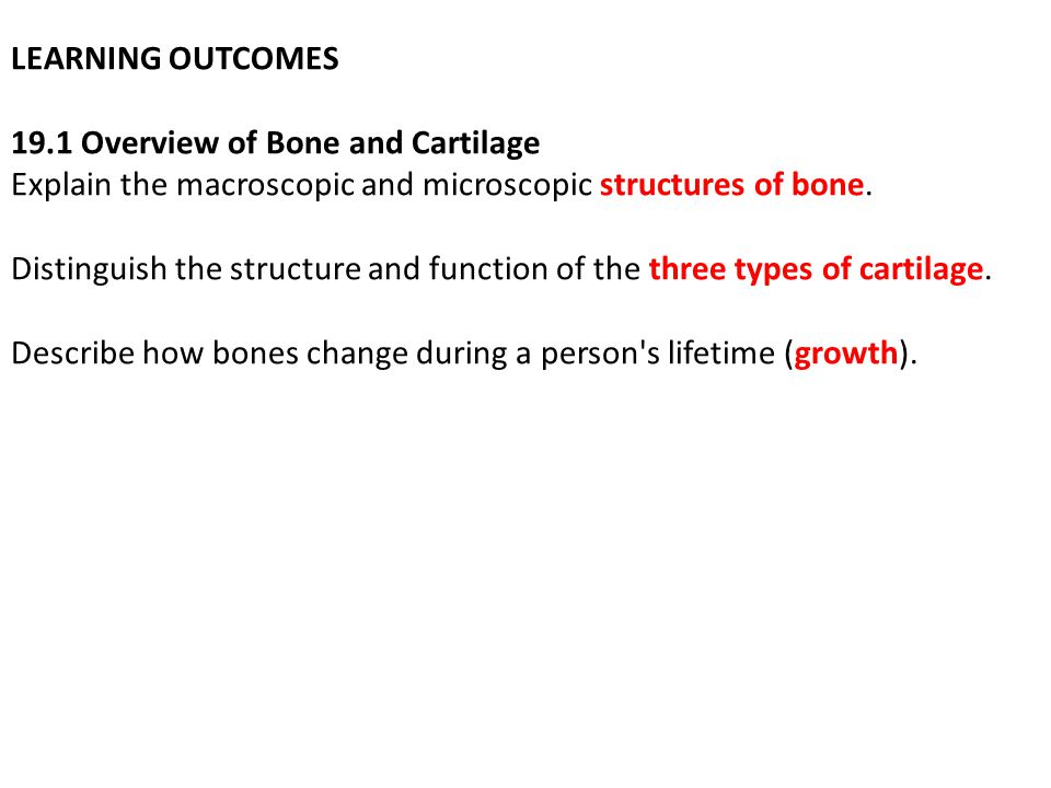 LEARNING OUTCOMES 19.1 Overview of Bone and Cartilage Explain the macroscopic and microscopic structures of bone.