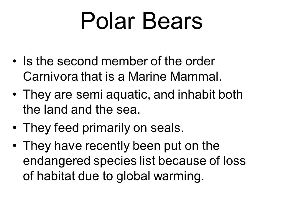 Polar Bears Is the second member of the order Carnivora that is a Marine Mammal.
