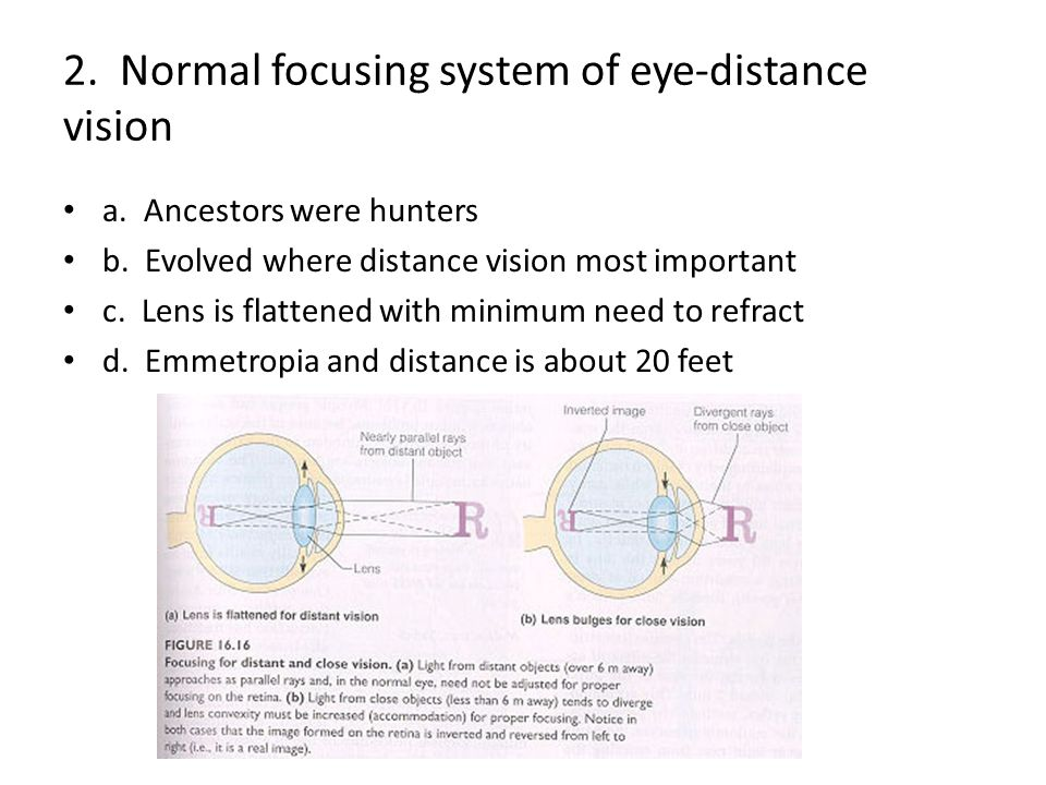2.Normal focusing system of eye-distance vision a.