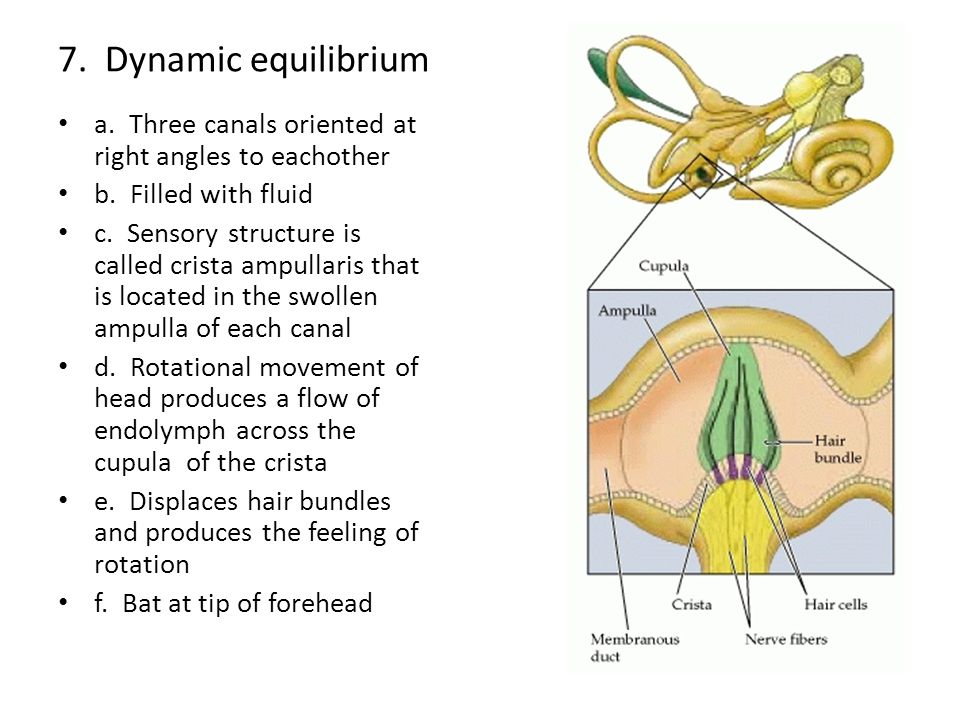 7.Dynamic equilibrium a. Three canals oriented at right angles to eachother b.