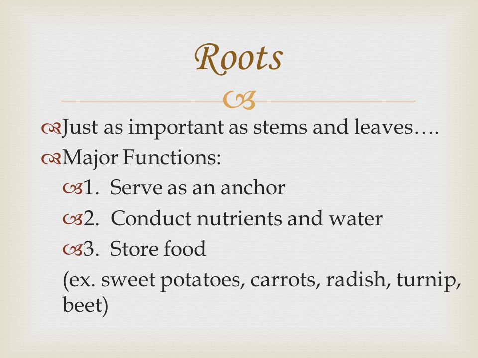   Just as important as stems and leaves….  Major Functions:  1. Serve as an anchor  2. Conduct nutrients and water  3. Store food (ex. sweet pot