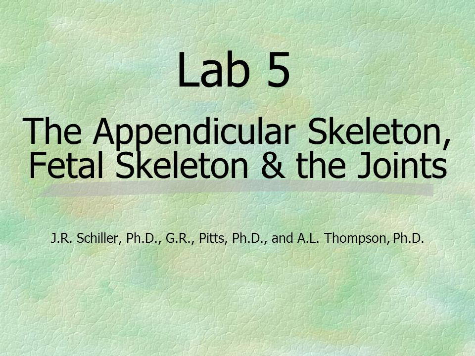 Lab 5 The Appendicular Skeleton, Fetal Skeleton & the Joints J.R.