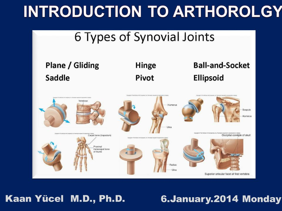 2 1.1. CLASSIFICATION OF JOINTS 1.2. STABILITY OF JOINTS 1.3. JOINT VASCULATURE AND INNVERVATION