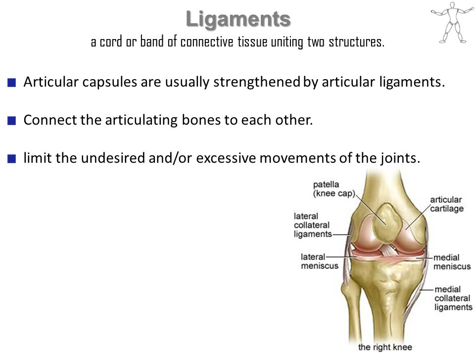 Ligaments a cord or band of connective tissue uniting two structures. Articular capsules are usually strengthened by articular ligaments. Connect the