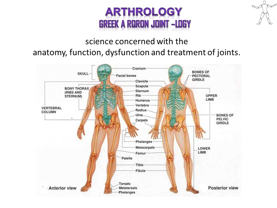 science concerned with the anatomy, function, dysfunction and treatment of joints.