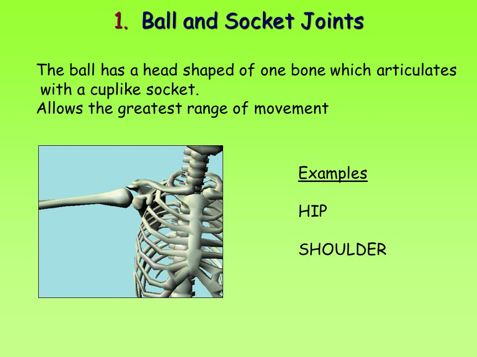 1. Ball and Socket Joints The ball has a head shaped of one bone which articulates with a cuplike socket. Allows the greatest range of movement Exampl