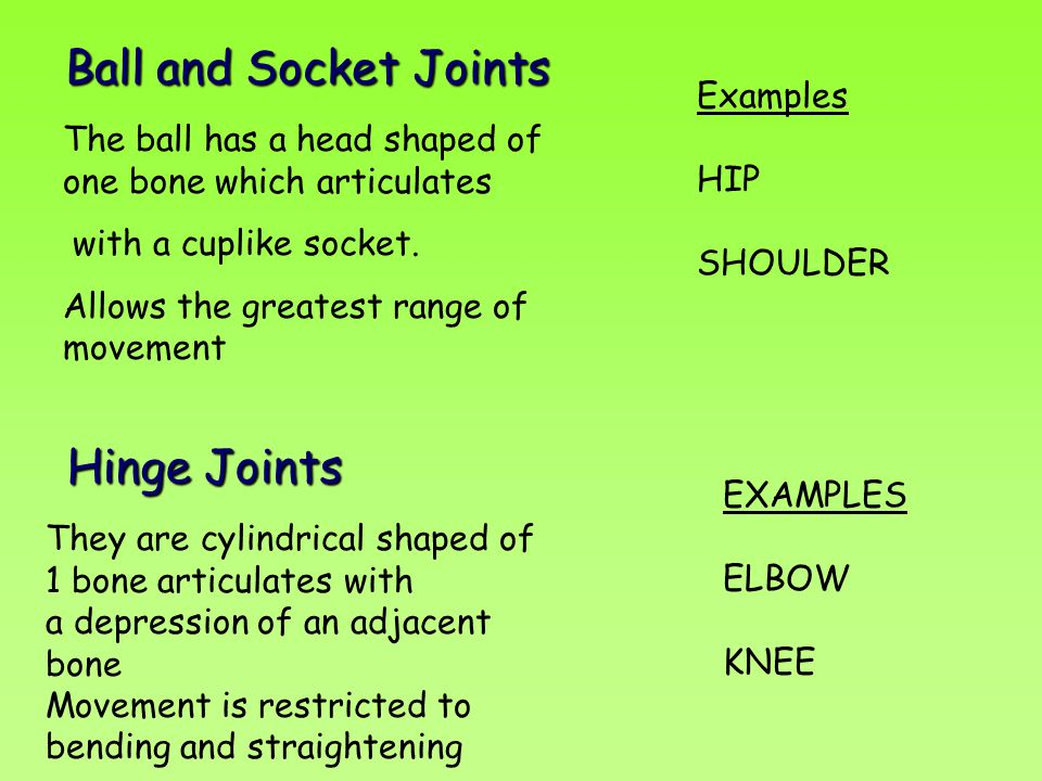 Ball and Socket Joints Ball and Socket Joints The ball has a head shaped of one bone which articulates with a cuplike socket. Allows the greatest rang