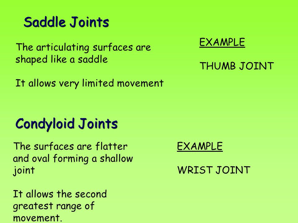 Saddle Joints The articulating surfaces are shaped like a saddle It allows very limited movement EXAMPLE THUMB JOINT Condyloid Joints The surfaces are