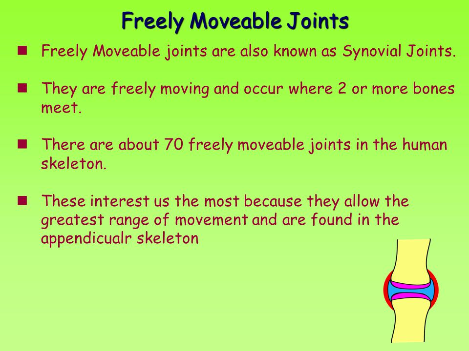 Freely Moveable joints are also known as Synovial Joints. They are freely moving and occur where 2 or more bones meet. There are about 70 freely movea