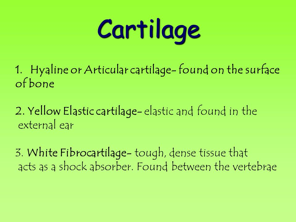 Cartilage 1.Hyaline or Articular cartilage- found on the surface of bone 2. Yellow Elastic cartilage- elastic and found in the external ear 3. White F