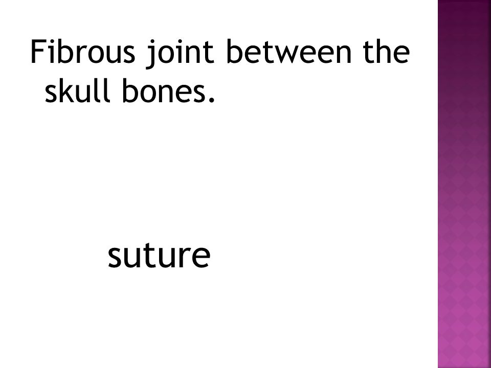 Fibrous joint between the skull bones. suture