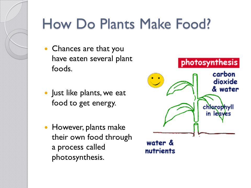How Do Plants Make Food? Chances are that you have eaten several plant foods. Just like plants, we eat food to get energy. However, plants make their