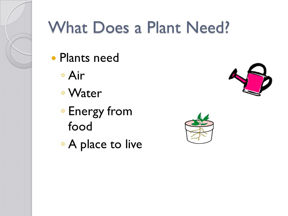 Two Types of Stems Non-woody Stems ◦ Smaller plants have stems that are soft, green, and bendable.
