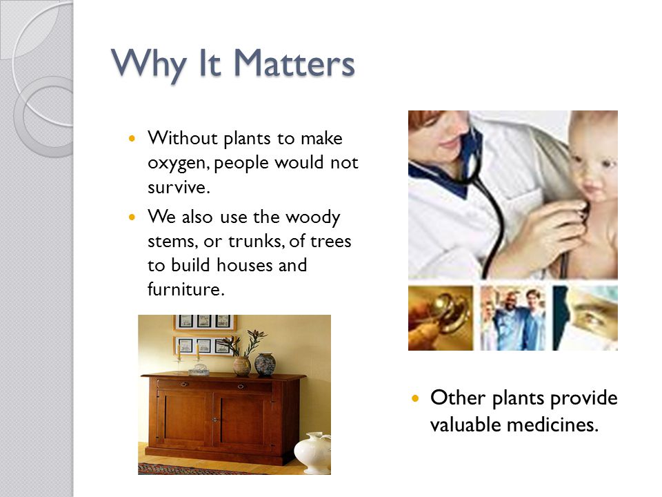 Why It Matters Other plants provide valuable medicines. Without plants to make oxygen, people would not survive. We also use the woody stems, or trunk