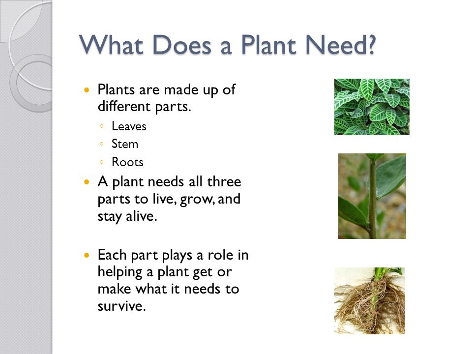 What Does a Plant Need? Plants are made up of different parts. ◦ Leaves ◦ Stem ◦ Roots A plant needs all three parts to live, grow, and stay alive. Ea