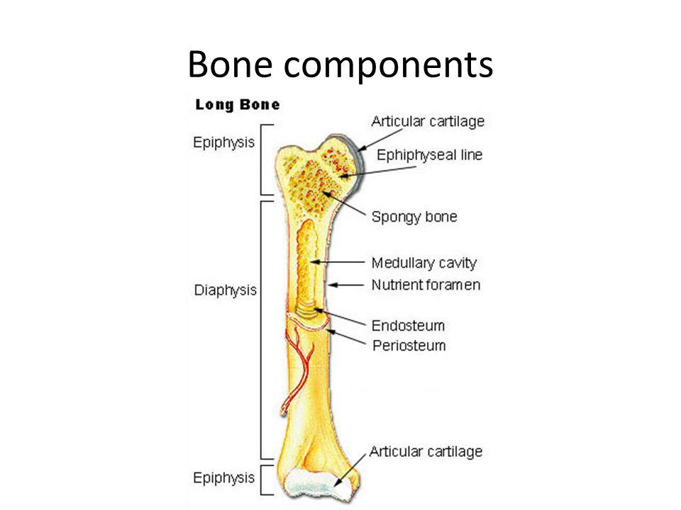 Bone components